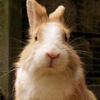 Okresní výstava králíků, drůbeže a holubů - Studénka 1